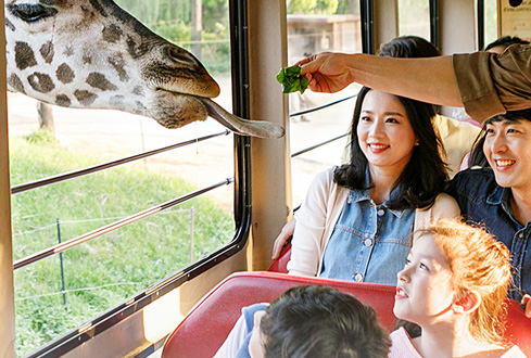주토피아(동물원)